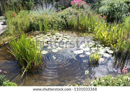 Natural backyard water pond with water plants and small water fountain #1101033368