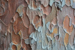 Natural bark background or texture. Crimean pine tree. Abstract pattern