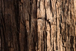 Natural bark texture background material. For Design. Old Wood Tree Background Pattern. dry tree bark close up.