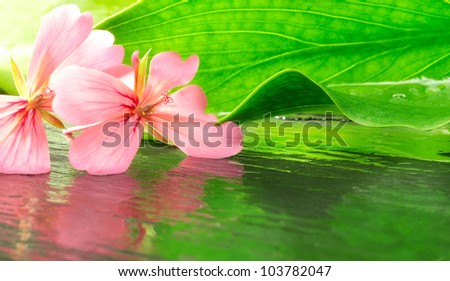 natural beauty concept with geranium and leaf