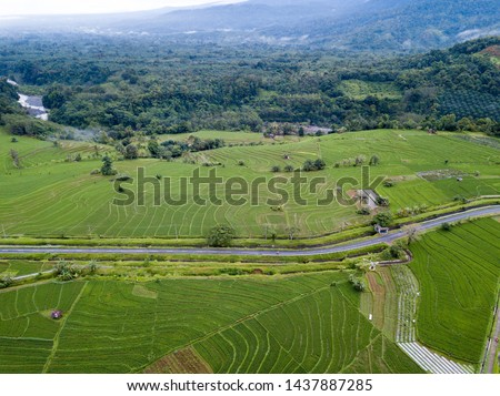 natural beauty in Indonesia rice fields on the green and wide panoramas with mountain background