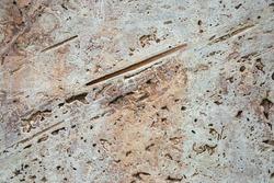Natural beige stone texture - cut freshwater limestome (travertin, Italian banded marble, calc tufa)