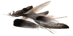 Natural bird feathers isolated on a white background. pile  pigeon and goose feathers close-up