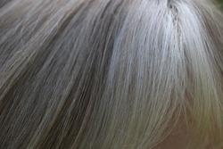 Natural blonde hair close up with gray highlights.