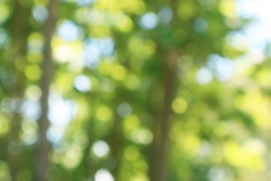 Natural bokeh.blured photo Natural green trees Lawn and trees green background.