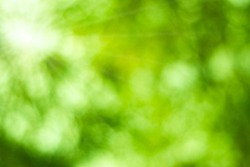 Natural Bokeh with sun rays.Green light bokeh nature background.Abstract blur green color for background,blurred and defocused effect spring concept.