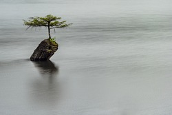 Natural Bonsai tree in the middle of the Fairy Lake in Vancouver Island.