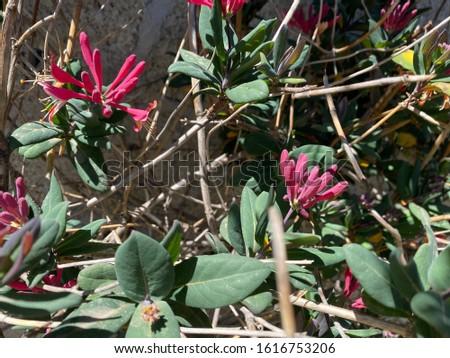 Natural Botany of Farms Plant