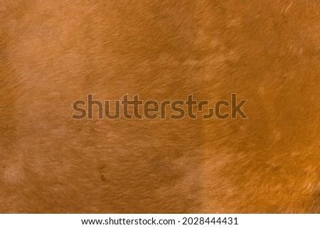 Natural brown fur texture. Animal hair of fur cow leather texture background. Natural fur texture background.
