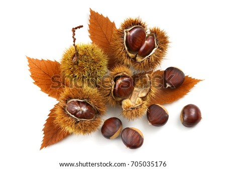 Shutterstock natural chestnuts with chestnut leaves isolated