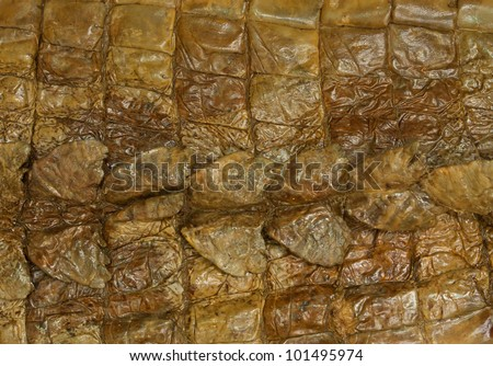 natural crocodile skin texture