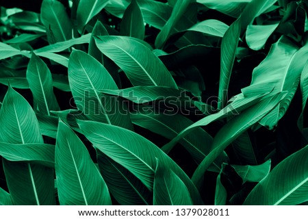 Natural dark leaves for the background