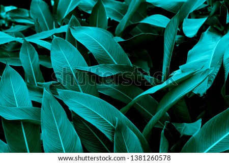 Natural dark leaves for the background #1381260578