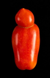 Natural deformation of a San Marzano tomato isolated on a black background.