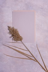 Natural dried reed flower and blank textured paper sheets on textured dusk concrete background. Copy space. Mochup with organic floral design in pastel colors. Vertical orientation.