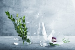 Natural drug research, Plant extraction in scientific glassware, Alternative green herb medicine,