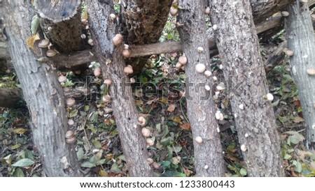 Natural elevation Mushrooms #1233800443