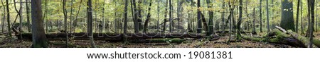 Natural european deciduous autumnal forest panorama with dead tree lying