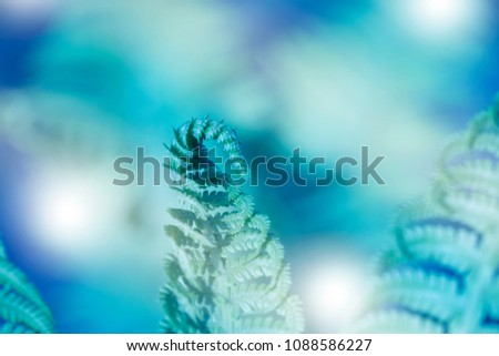 Natural fern leaf closeup. Ornament leaf blue toned photo. Carved fern leaves inverted photo for abstract background. Artistic fern pattern. Tropical nature banner template. Trendy blue fern print