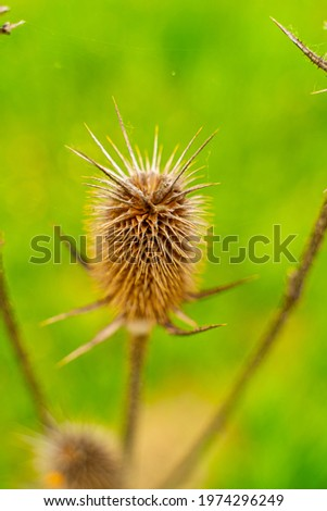 Natural field thorn close up