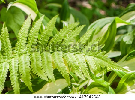 Natural floral background. Beautiful green fern leaves texture with sun rays.