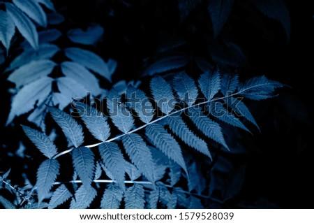 Natural floral blue blurred fern leaves background. Rainforest fronds concept. #1579528039