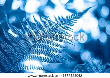 Natural floral blue blurred fern leaves background. Rainforest fronds concept. #1579528042