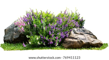 Natural flower and stone in garden isolated on white background. Garden flower part - Shutterstock ID 769411123