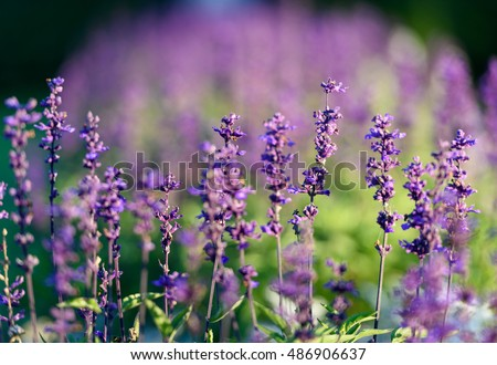 stock photo natural flower background amazing nature view of purple flowers blooming in garden under sunlight 486906637 - Каталог — Фотообои «Цветы»
