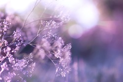 Natural foggy background in violet and lilac colors. Meadow grass in the sun. Minimalism. Delicate floral background. Can be used as background for happy birthday greeting cards, for weddings.
