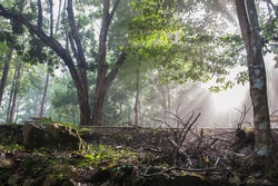 Natural forest in the park at dawn.