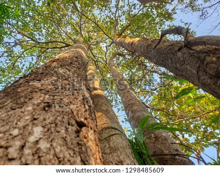 Natural forest thailand #1298485609