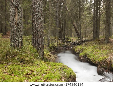 Natural forest with frozen stream, late autumn
