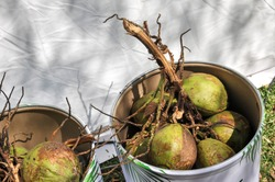 Natural fresh coconut branch in the iron basket with white background at King Rama 9 Park Bangkok Thailand