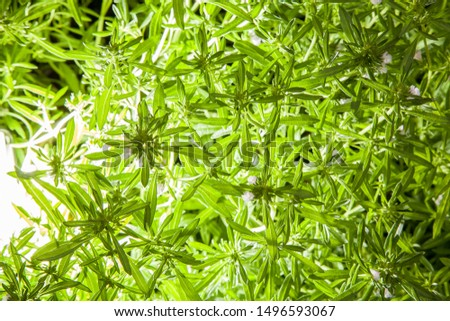 natural fresh organic green plants texture