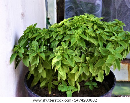 natural fresh organic leaf garden green piant nature closeup