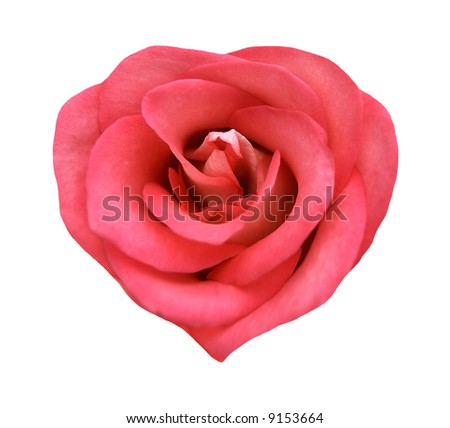 Natural fresh rose in the form of heart