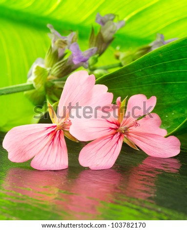 natural freshness with geranium flower composition