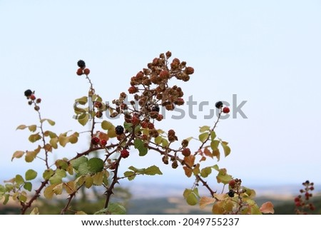 Natural fruit at the mines of Vavdos