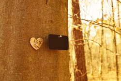 natural funeral in woodland, Grave in the forest, Natural burial grave site, showing blank memorial plaque and a heart shape in treetrunk. copy space for text. tree burial and All Saints Day concepts