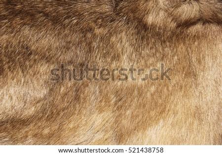 Natural fur texture closeup. Texture