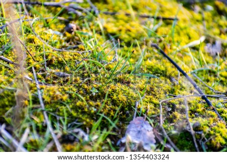 Natural glade of green moss, small and large. Damp and damp place, beautiful, fluffy and soft moss. Natural phenomenon and interesting vegetation in the spring, near the river, in the Rostov region