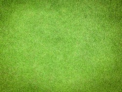 Natural grass texture pattern background golf course turf lawn from top view in bright yellow green color