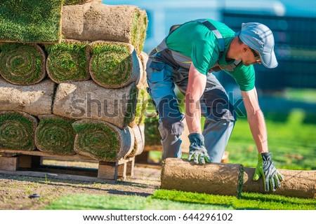 Natural Grass Turf Professional Installer. Gardener Installing Natural Grass Turfs Creating Beautiful  Lawn Field. Stockfoto ©