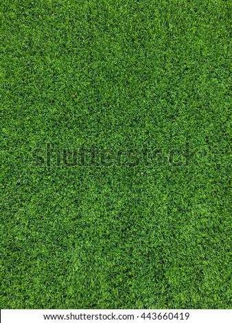 Natural green background - Shutterstock ID 443660419