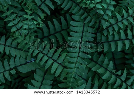 Natural green background of tropical leaves