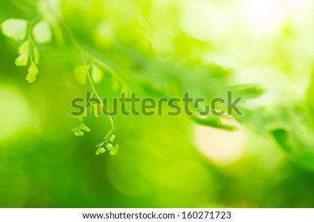 Natural green background, the bokeh effect  #160271723