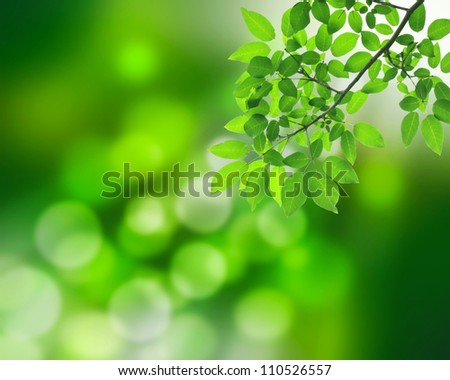 Natural green background with green leafs