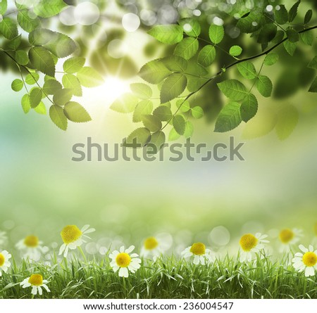natural green background with selective focus - Shutterstock ID 236004547
