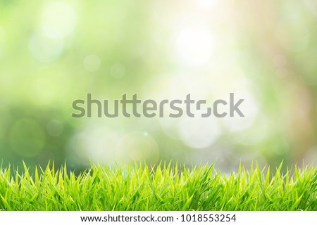 Stock Photo Natural green background with spring or summer